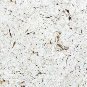 Искусственный кварцевый камень Vicostone BQ8583 Akoya - Modern Acrylic Stone
